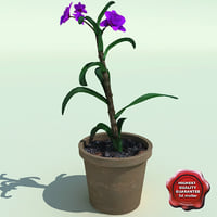 3ds dendrobium modelled