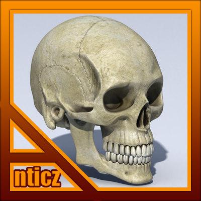 Skull_Stnd_TN01.jpg