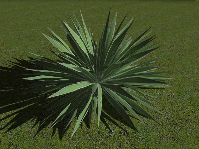 angustifolia.jpg
