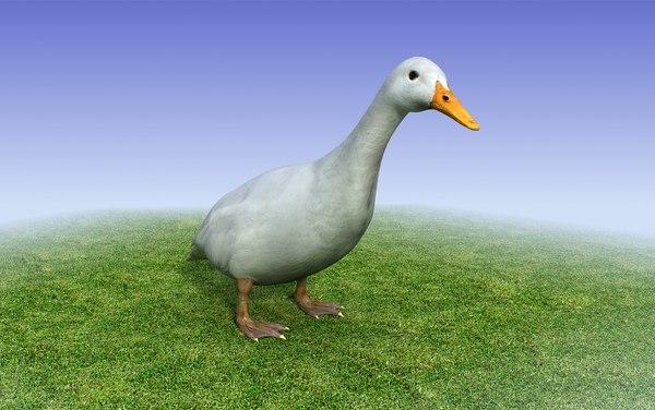duck_lowpoly_3dmodel_2.jpg