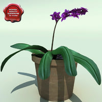 3d model of dendrobium v2
