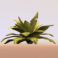 obj plant leafed