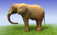 3d low poly model African elephant