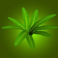 3d herbal grass floral