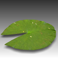 water lily leaf obj