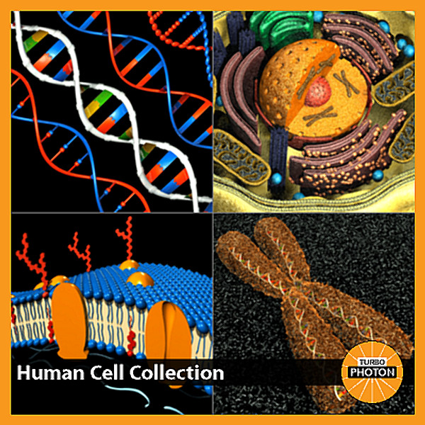 Human_Cell_Collection.bmp