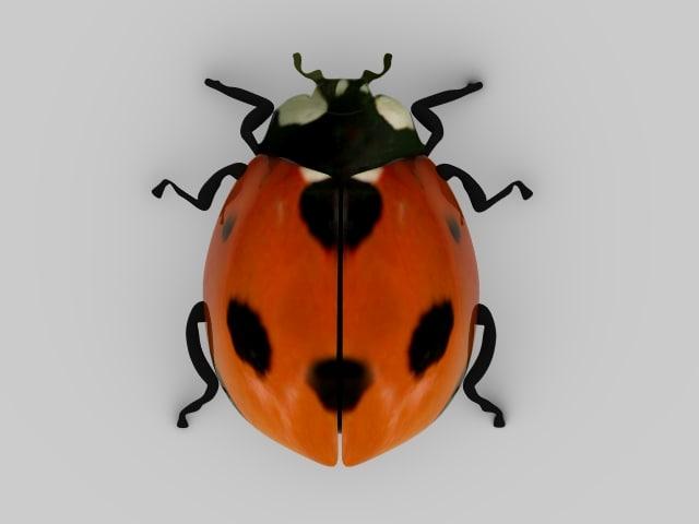 Ladybird_Top.jpg