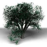 max tree