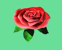 rose flower 3d max