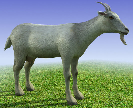 3d_model_low_poly_goat_fotico.jpg