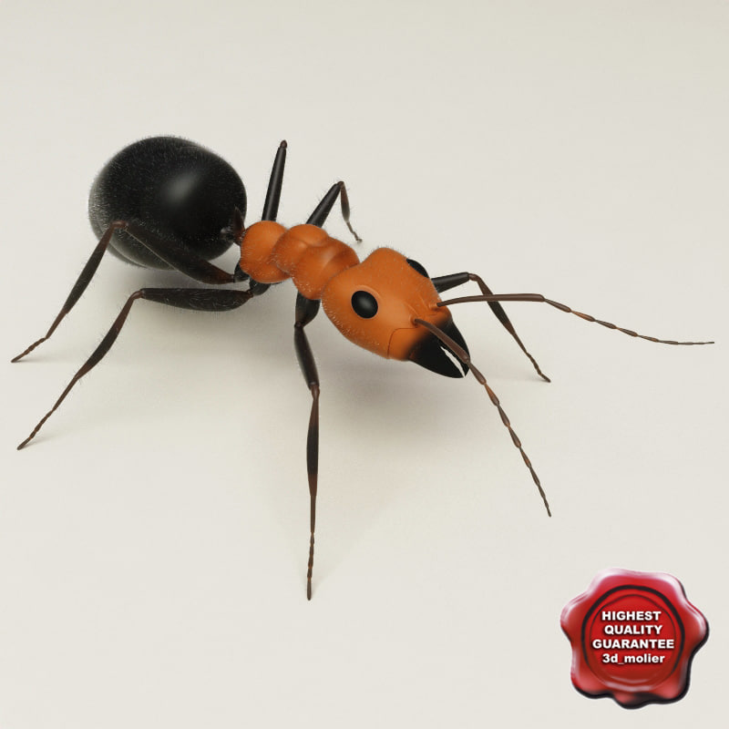 Ant_0.jpg