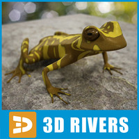 3d model of tree frog hourglass