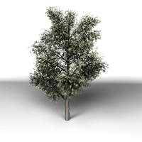 tree modo 3d model