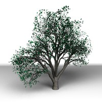 tree modo 3d x