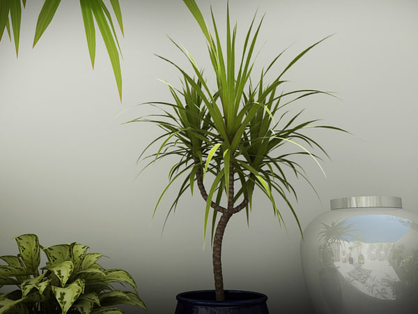 lwo plants - PLANTS COLLECTION... by Nodexis