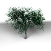 3d model of tree
