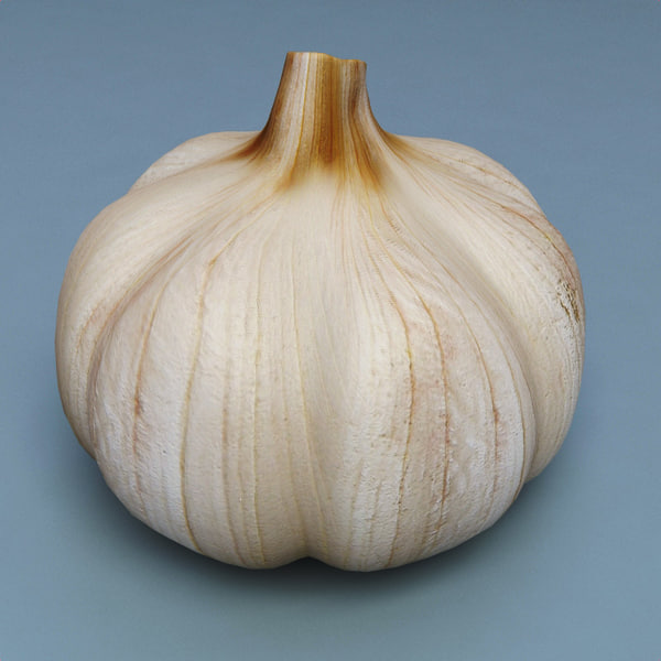3d model of garlic modelled - Garlic... by 3d_molier