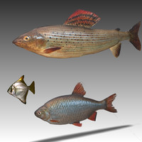 3d model pack fishes