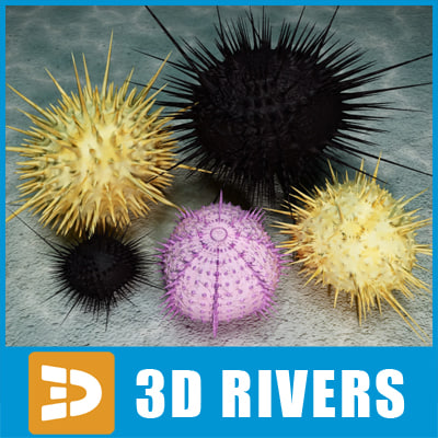 Sea-urchin-set-Logo.jpg
