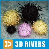 Sea urchin set by 3DRivers