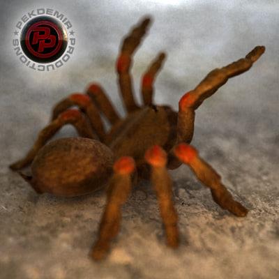 Spider-09.jpg