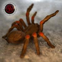 Spider / Tarantula
