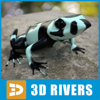3d atelopus frog model
