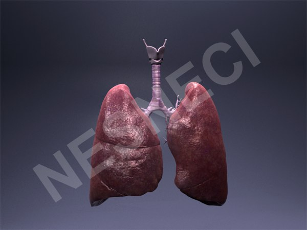 Lungs_Render_2.png