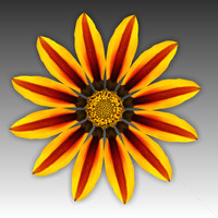 3d model flower