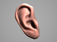3d model photoreal human ear