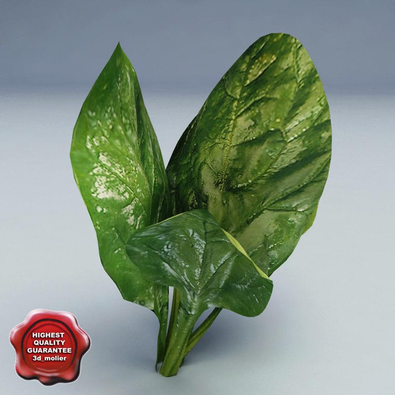 Spinach_0.jpg