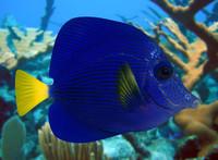 3d fish 06