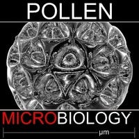 pollen spore 3d obj