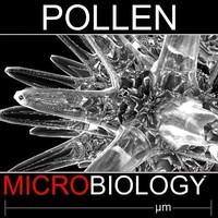 Pollen Spore