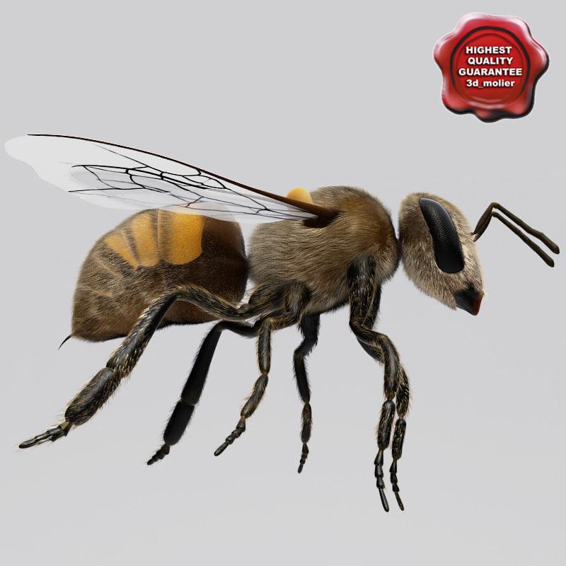 Bee_00.jpg