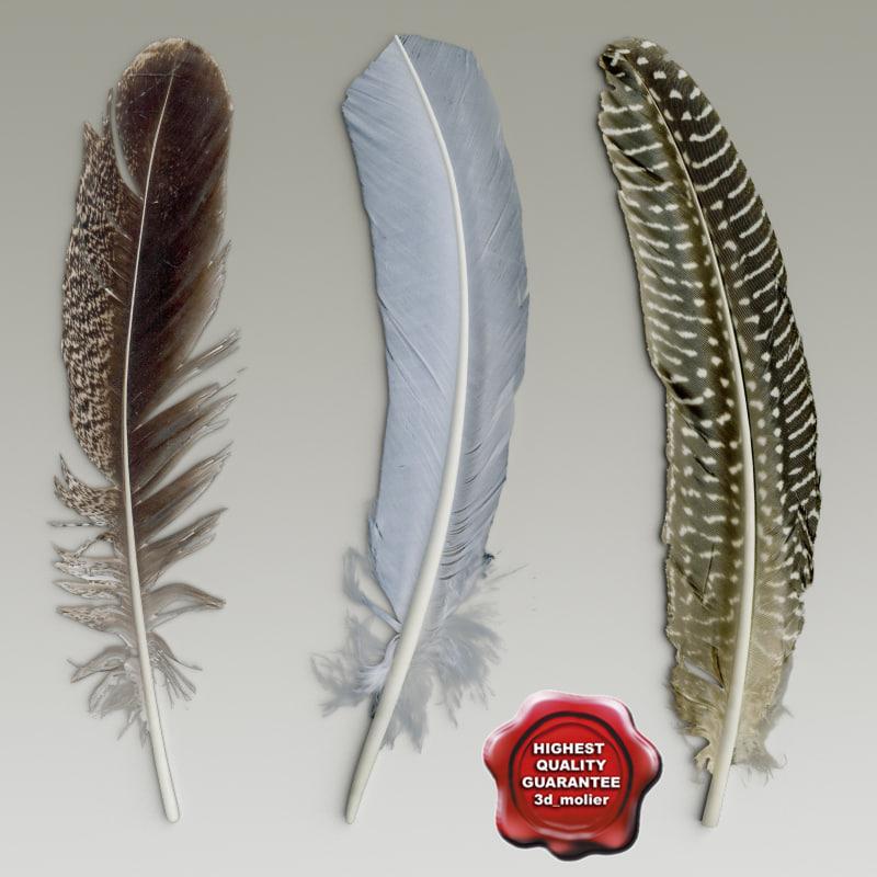 Birds_feathers_00.jpg