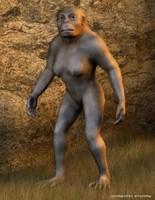 Lucy Australopithecus