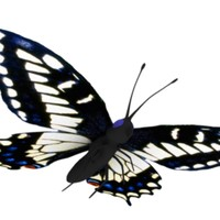 lightwave butterfly mapped wings