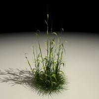 Plant01_out.c4d.zip