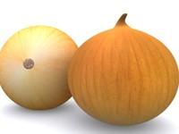 3d model onion