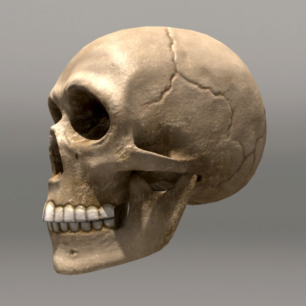Free 3d models skull and bones - ae606