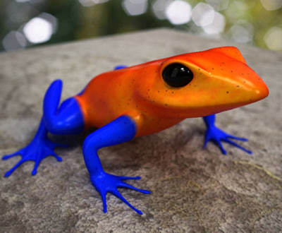 3d exotic frogs model - Exotic frogs collection by 3DRivers... by 3DRivers