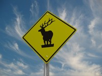 Elk Crossing Road Sign