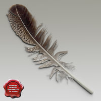 bird feather v1 3d model