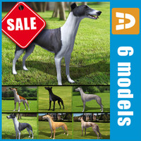 Greyhound collection by 3DRivers