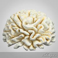 Fake Coral 2