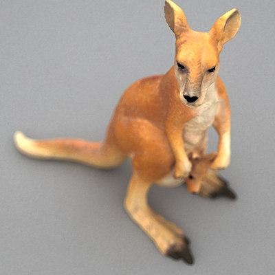 Kangaroo-08.jpg