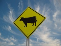 cattle crossing street sign 3d model