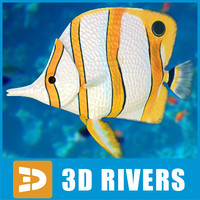 Butterfly fish by 3DRivers