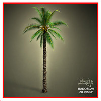 3d adult palm realistic